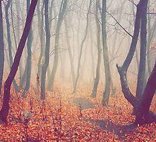 Fall Fog by sullyshah