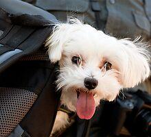 dog in bookbag by sullyshah