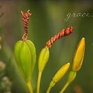 Blackberry Lilly by JulieLegg