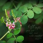 Lespedeza by JulieLegg