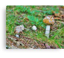 A Mushroom's World Canvas Print