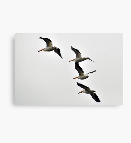 Pelicans flying  Canvas Print