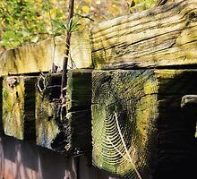 Nature versus Railroad ties by jckiss