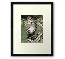 water monkey Framed Print