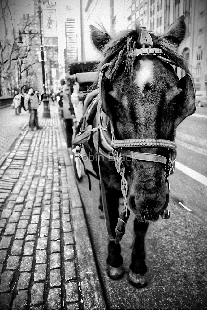 Horse Carriage by Robin Black