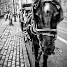 Horse Carriage by Robin Lee