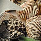 Seashells 2 by Robin Black