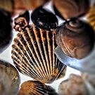 Seashells by Robin Lee