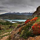 Flame Bushes, Laguna and Mountains by Peter Hammer