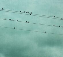 Birds Silhouetted on Utility Wires Sticker