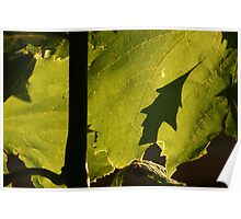 Green shadows...Oak Leaf from Grapes? Poster