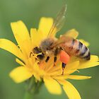 Bee and Yellow Flower by Bami