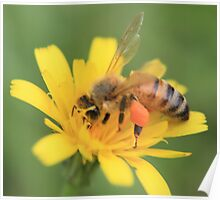 Bee and Yellow Flower Poster