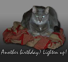 Grumpy Cat Birthday Card by MotherNature