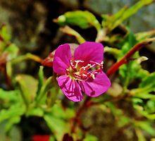 The flower that i owe you 3 by Luis Alberto Landa Ladrón de Guevara