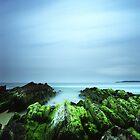 """Beachular Mosstrophy"" ∞ Barragga Bay, NSW - Australia by Jason Asher"