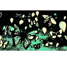 Butterflies in the gloom  Photographic Print