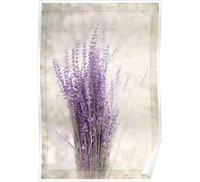 Lavender Bunch Poster
