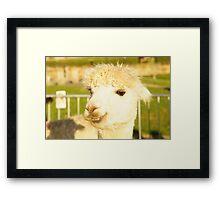Al the Alpaca Framed Print