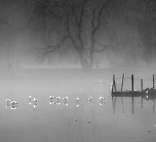 Misty Morning by Stephen Knowles