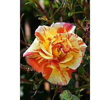 Sunshine Rose Photographic Print