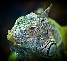 Iguana at mogo zoo by BenLeSauvage