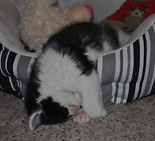 It's A Hard Life Being A Kitten by Tricia Winwood