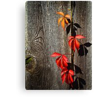 Escapee Canvas Print