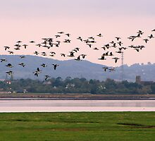 Barnacle Geese at Sunset by Lauren Tucker