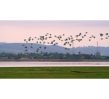 Barnacle Geese at Sunset Photographic Print