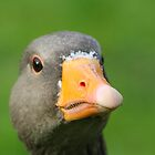 Greylag Goose Close-Up by Lauren Tucker