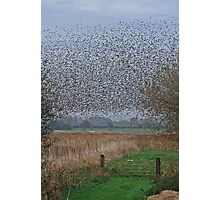 Starlings Roosting On The Levels Photographic Print