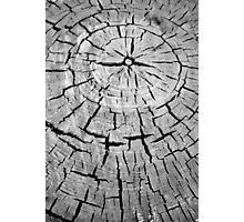 crack and annual rings of a tree Photographic Print