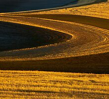 Patterns of Gold by DawsonImages