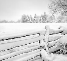 Stopping by the side of the road on a snowy morning by Steve Silverman