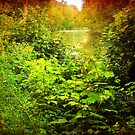 A Peek Down the Creek by teresa731