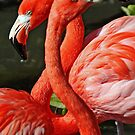 Beautiful Flamingos by Sheryl Unwin