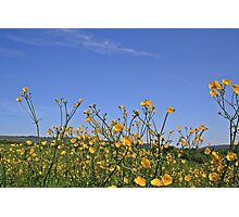 Buttercup Field Photographic Print