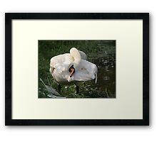 mute swan yoga Framed Print