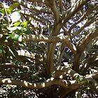 Tangled Web Tree by peterthompson