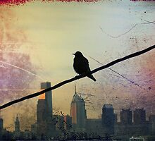 Bird on a Wire by Bill Cannon