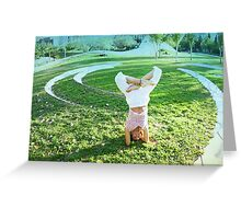 Headstand in full lotus  Greeting Card