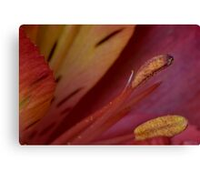 Sweet and Spicy Canvas Print