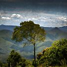 a single tree on the mountain top by Clare Colins