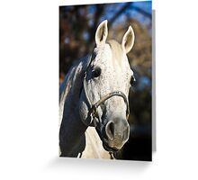 Playgun-AQHA Stallion Greeting Card