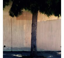 Dreamy Urban Tree and Fence  Photographic Print
