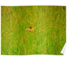 Wings in a Field of Grass Poster
