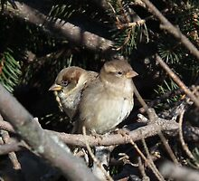 Two in the  Bush by Deb Fedeler