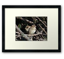 Two in the  Bush Framed Print