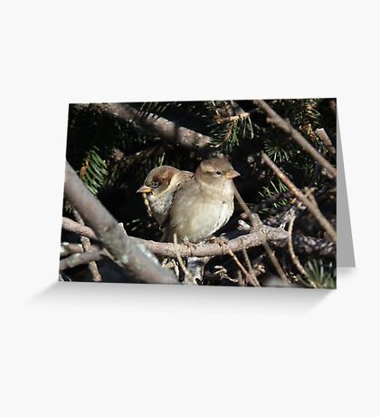Two in the  Bush Greeting Card